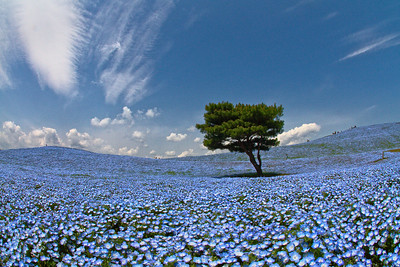 Hitachi Seaside Park Apr 2011