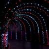 Festival of Lights Holiday celebration at Moody Gardens in Galveston.