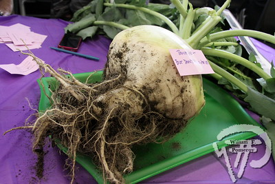 NAUSET REG. HIGH SCHOOL — turnip festival — Eastham, MA 11 . 22 - 2014