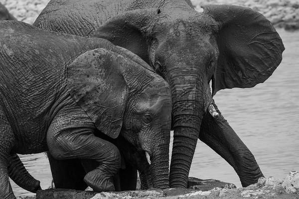 Namibian Elephants