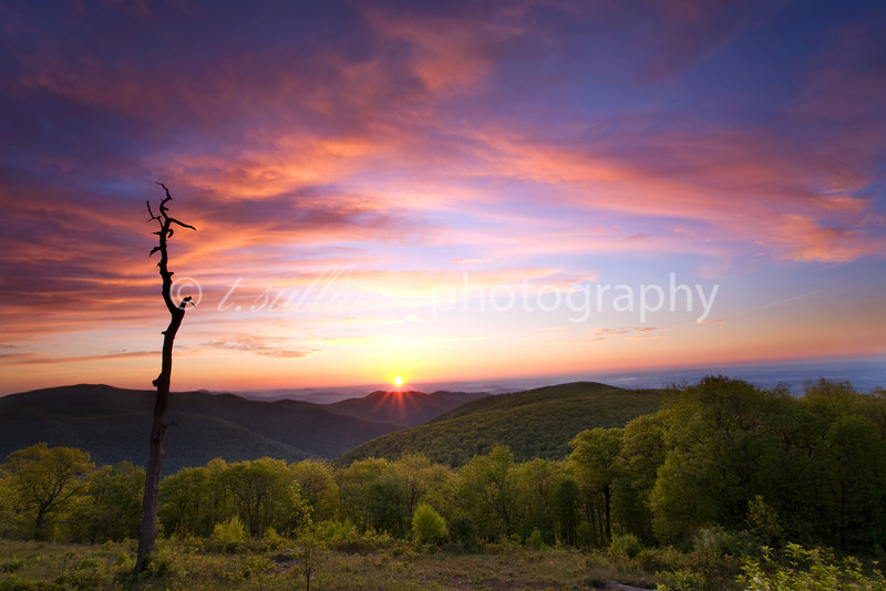 A beautiful Spring sunrise on Skyline Drive in Shenandoah National Park.