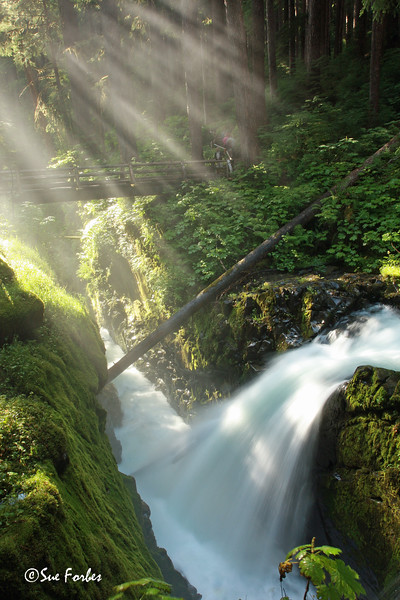 Sun rays<br /> Suns rays catching the mist from Sol Duc waterfall, Olympic National Park