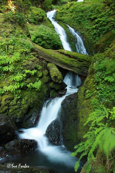 Stream in Olympic National Park<br /> Stream in the rainforest of the Olympic National Park, Washington
