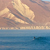 Lone paddler<br /> Stand up paddle boarding at Punta San Carlos, Baja Peninsula, Mexico