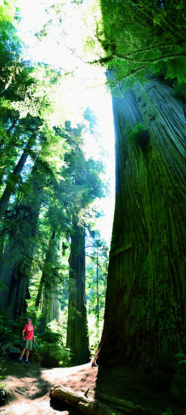 Thanks for all the comments on yesterdays photo!!  This is The Boy Scout Tree - Technically not Oregon, but we crossed the border down into CA for a day to go scope out the infamous redwoods.  I had never been there before and was completely blown away by these legendary, ancient trees.  I have never in my life been so impressed by nature.  I never thought a tree would put me in my place, but I felt very tiny, and insignificant walking through this forest.  It was a very humbling experience, and I wish I could have stayed there for much longer than just an afternoon. <br /> <br /> This tree was called the Boy Scout tree - named for the boy scout troop that built the 3 mile trail back to it.  It is the 3rd largest tree in all of redwood natl' forest.  This photo doesn't come close to showing you how big this tree actually was.