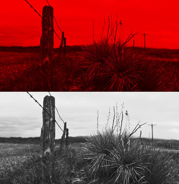 Digging though my stash of filters I came across my all but forgotten Red 29 filter!  This filter creates the most amazing contrasts for black and white photos.<br /> <br /> The images before the black and white conversion looks near apocalyptic, while the black and white is a nicely contrasted black and white!   I put both versions of the shot side by side so you can see the before and after.