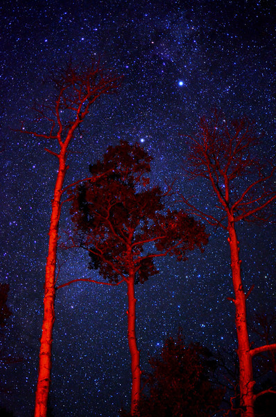 I've been out hiking and camping again this last week.  The night sky in the middle of nowhere Colorado seems like something straight out of science fiction, Especially in the Fall.  <br /> <br /> The red on the trees is from the campfire.