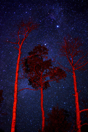 I've been out hiking and camping again this last week.  The night sky in the middle of nowhere Colorado seems like something straight out of science fiction, Especially in the Fall.    The red on the trees is from the campfire.