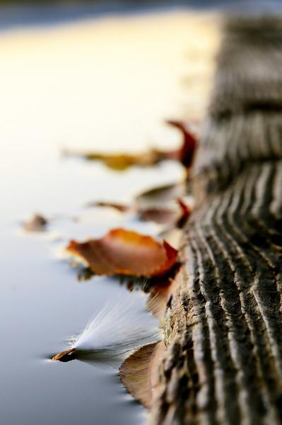 The Water Landing