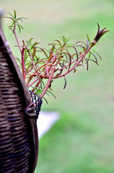 Plant in a hanging basket