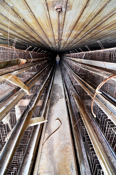 Ever wonder where your morning omelet comes from?  This is by far the creepiest building I've had to work in ever. This is an abandoned egg farm that just so happens to be on one of the properties purchased by the county.  This facility at one point held roughly 46,000 chickens.  All spent their entire lives cooped up in a 1 foot by 1 and a half foot cage down these 600 foot long corridors lined top to bottom with chicken pens.  Some of the chickens that never made it are still lying there in the bottom of their cage.  It's an ugly place to be working.  I'm going to have some interesting photos the next few weeks that's for sure.