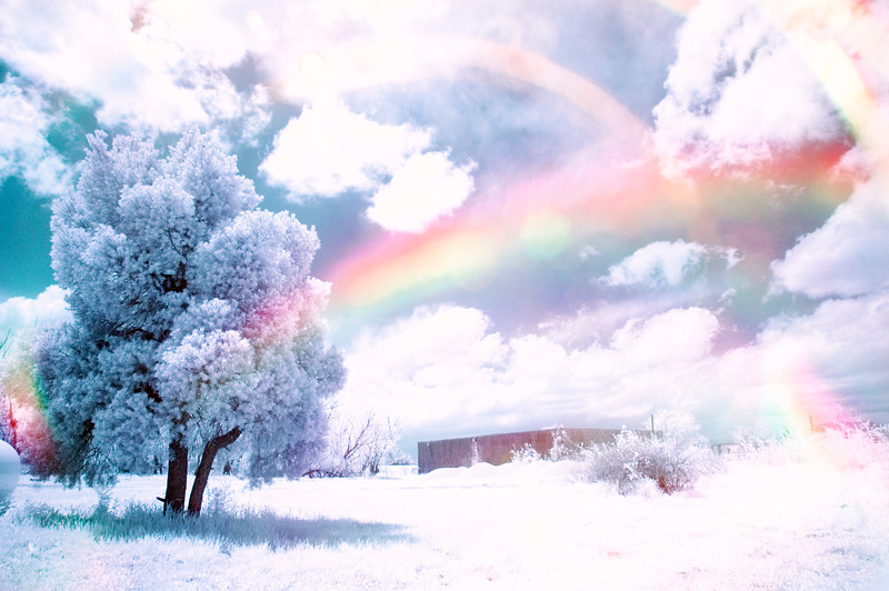 Visible Light & Infrared in the same shot!!  WHHAAAAAT?!  I created this shot by holding the infrared filter over my lens, but just slightly opening a gap between the filter and the lens to allow sunlight to reflect in and create rainbows!!