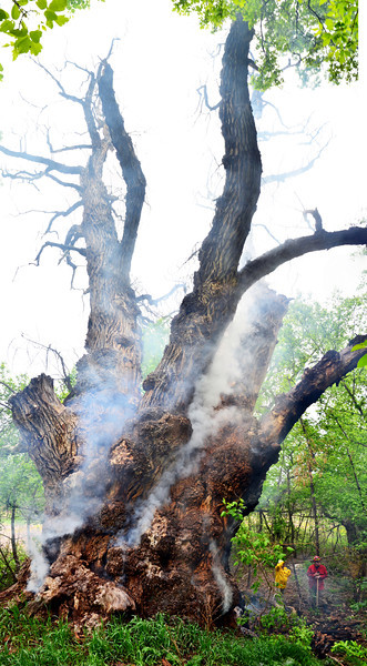 This is (was) the champion cottonwood tree.  The largest cottonwood tree in north america, located right here in boulder county.  Yesterday for reasons unknown, the tree  caught fire and burnt to the ground.   Made for some cool photos, but is a sad story none the less :(
