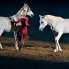 Dancing Horses at Stock Show