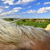 The field of horses again.  This one particular horse in the foreground would not get out of my shot.  I would move, and she would move with me and stand directly in front of the camera.  So instead of fighting it, I decided to make her the main subject of my photo by putting just her back with mane blowing in the wind in focus, and her surroundings and environment over her back behind her and slightly out of focus.  I am very pleased with the results!