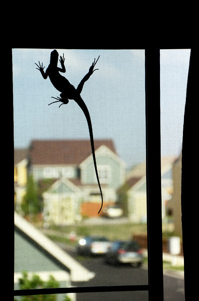 The Great Escape (attempt) - My young iguana trying to escape out the window, foiled by the screen.