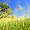 Dancing Grass<br /> <br /> Super windy day - I couldn't help but play with some long (1/10s) exposures!