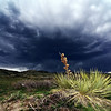 Storm Season - I used a fast shutter speed and a small aperture to get the most out of the dark clouds, and I used a flash on the yucca plant in the foreground to keep it from getting too dark.