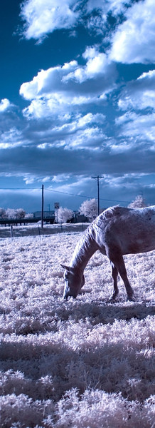 I cheated.  This isn't a true panorama shot. I cropped it to look like this.  The other half of the original photo had a large blurry horse butt in the foreground of this horse.  I had to chop it out.