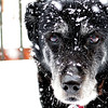 an old snowy dog