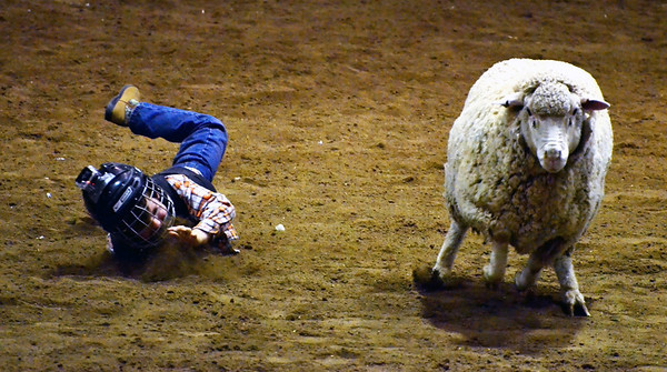 Another shot from the stock show, and from my favorite event!!  Mutton Busting!!!!   This isn't the clearest photo - this was one of my first times shooting indoors at night only using the ambient from the building.    This shot totally shows the joy of busting mutton!  I wish I had known about this sport when I was this tike's age.