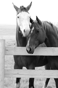 Horse Photography Session near Calgary Alberta