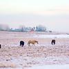 Horse Photography Session near Calgary Alberta