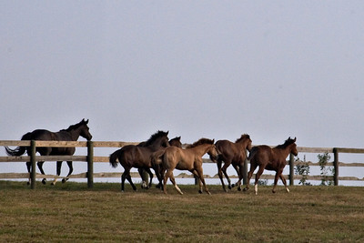 Mare and Foals II