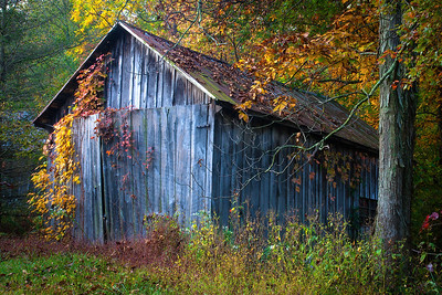 The Old Shed III