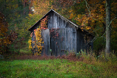 The Old Shed II