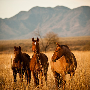 HORSES AND MORE HORSES