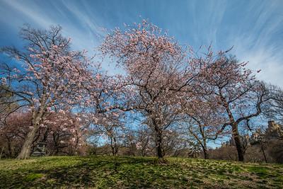 Spring Wisp