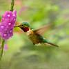 In the Pink Hummingbird