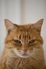 Grumpy the Cat