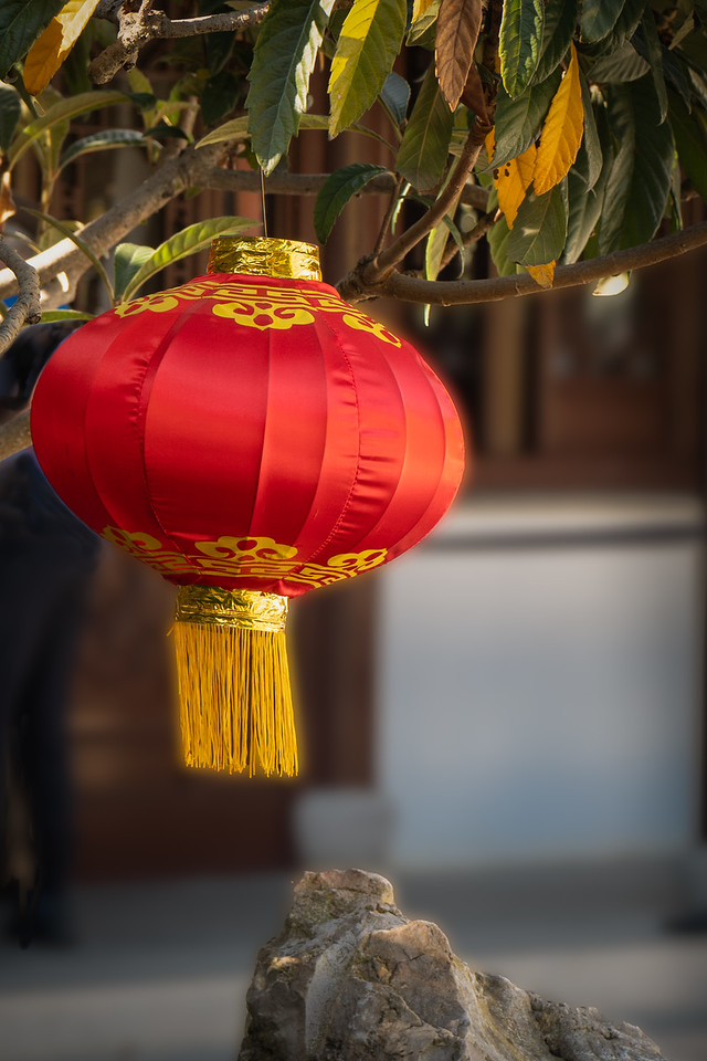 Red Chinese Lantern hanging from a tree