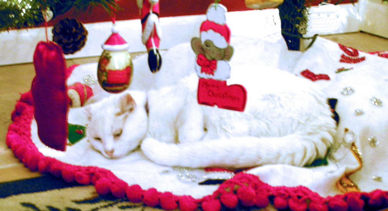 Sam, the cat under tree-Clemmie