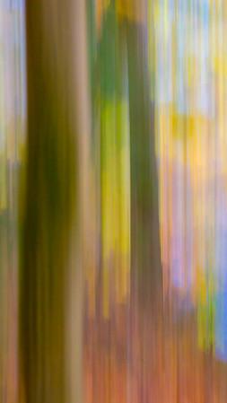 Forest Hush