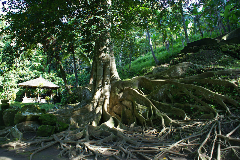 ROOTS. ELEPHANT CAVE. BALI. INDONESIA.