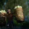 BROMO. MAN CARRYING BASKETS WITH KOOL. JAVA. INDONESIA.