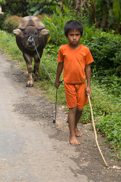 SULAWESI. TANA TORAJA. YOUNG BOY WITH HIS WATER BUFFALO.