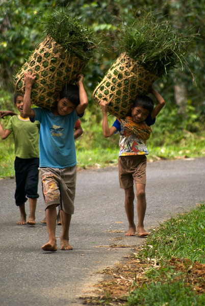 SULAWESI. TANA TORAJA. TORAJA KIDS ON THE ROAD.