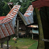 SULAWESI. TANA TORAJA. TONGKONAN TRADITIONAL HOUSES.