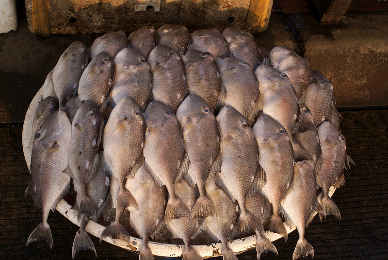 JAKARTA. FISH MARKET.