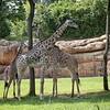 Nashville Zoo<br /> <br /> Donna