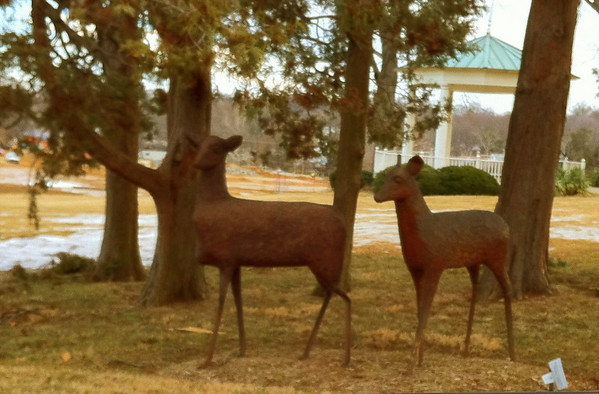 Strathmore Hall Deer