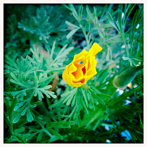 Folded yellow flower