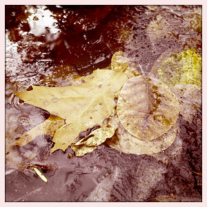 ***AFTER*** Icy Fall Pond Leaves.  This photo was heavily processed in Lightroom.  Adjusted exposure, black level, sharpening, and tone curve.  The veining on the oak leaf was significantly improved.  The higher resolution iPhone 4S camera allows more details to be recaptured in post processing.
