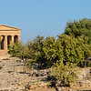 AGRIGENTO. VALLE DEI TEMPLI [TEMPLE VALLEY]. TEMPLE OF CONCORDIA.