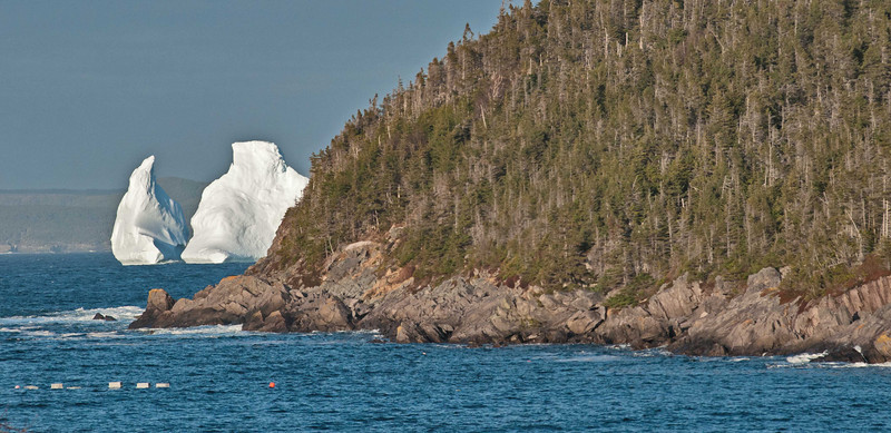 Kings Cove Iceberg 1