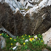 Hidden Treasure, Sawtooth Mountains - Idaho<br /> <br /> In a fractured stone pattern that resembles the surrounding peaks, small yellow daisies thrive in the reflected heat.